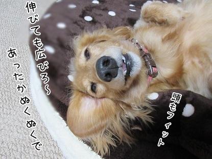 kinako6269.jpg