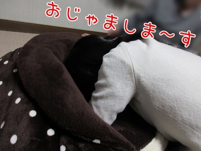 kinako6276.jpg