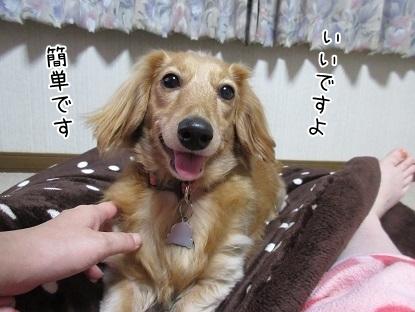 kinako6278.jpg