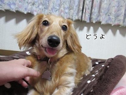 kinako6279.jpg