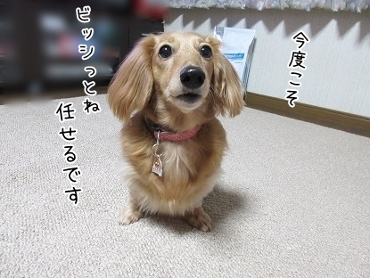 kinako6281.jpg