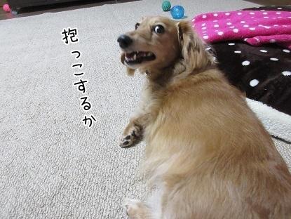 kinako6286.jpg