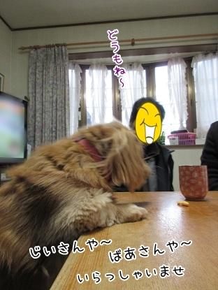 kinako6295.jpg
