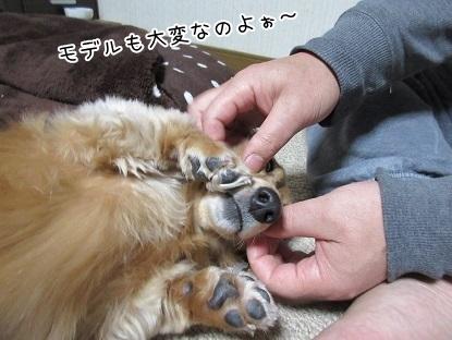 kinako6302.jpg