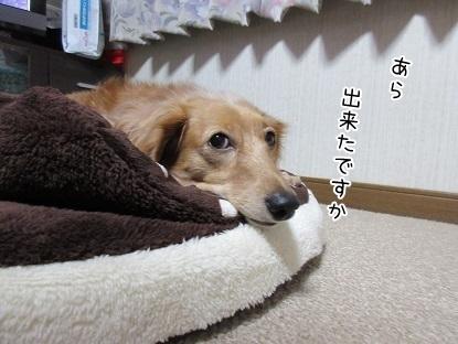 kinako6308.jpg