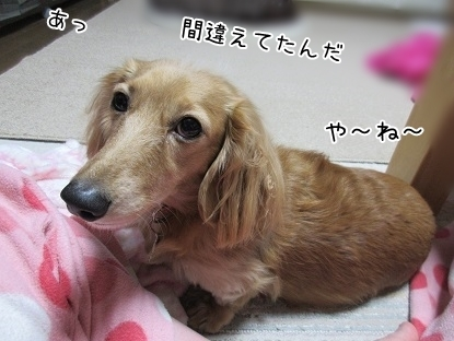 kinako6320.jpg