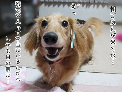 kinako6322.jpg