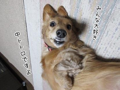 kinako6327.jpg