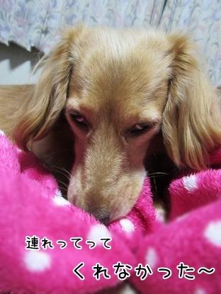kinako6332.jpg