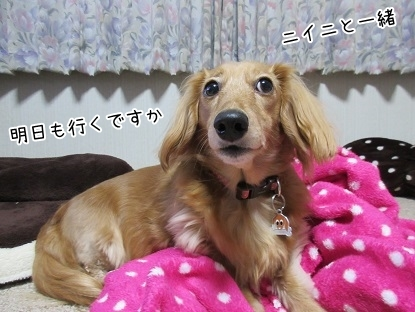 kinako6333.jpg