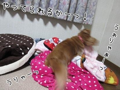 kinako6346.jpg