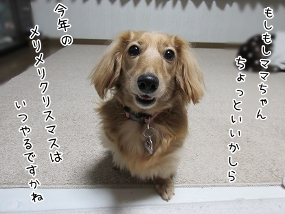 kinako6360.jpg