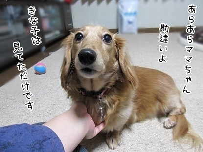 kinako6366.jpg