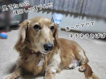kinako6370.jpg