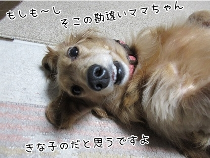 kinako6374.jpg