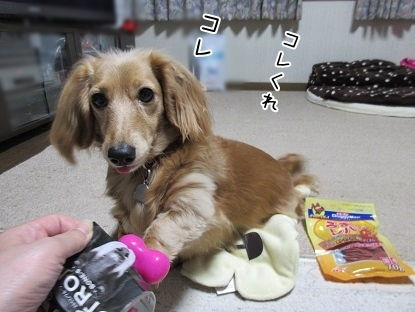kinako6387.jpg
