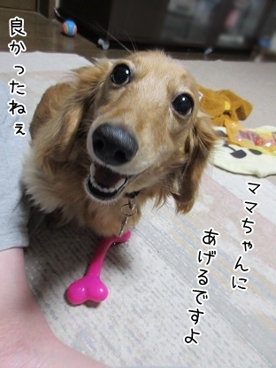 kinako6389.jpg