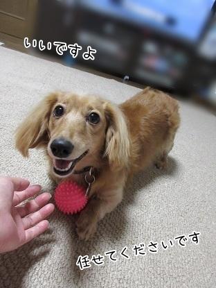 kinako6392.jpg