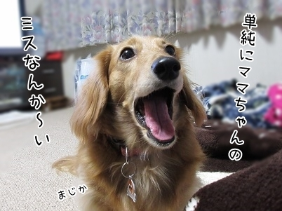 kinako6401.jpg