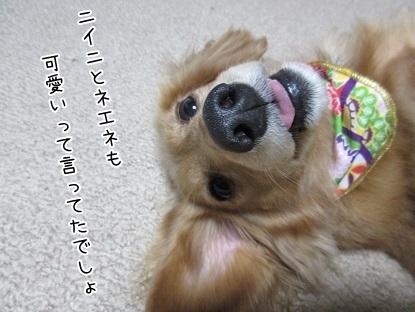 kinako6406.jpg