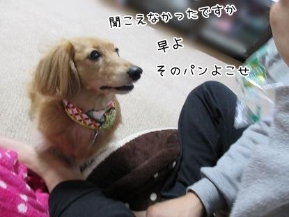 kinako6411.jpg