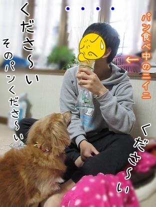 kinako6412.jpg