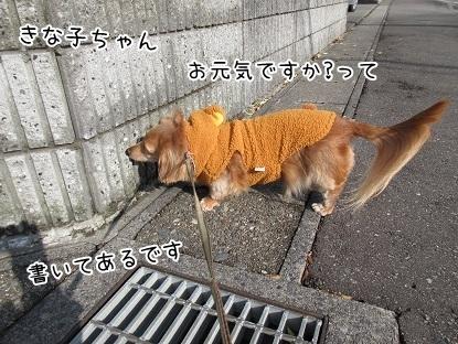kinako6425.jpg