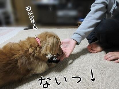 kinako6428.jpg