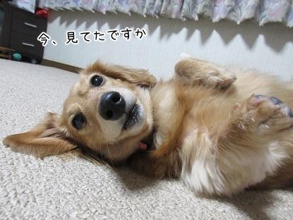 kinako6448.jpg
