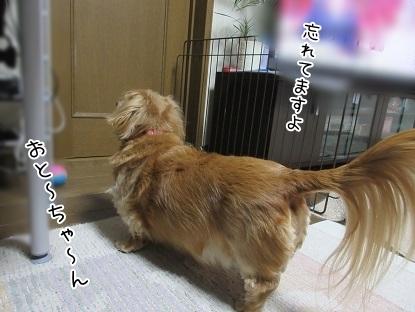 kinako6453.jpg