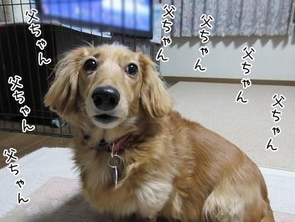 kinako6455.jpg