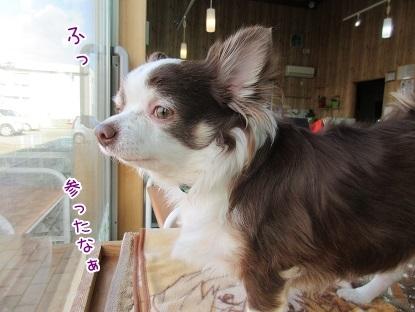 kinako6460.jpg