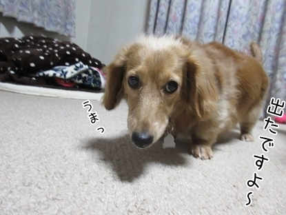 kinako6466.jpg