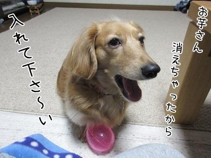 kinako6468.jpg