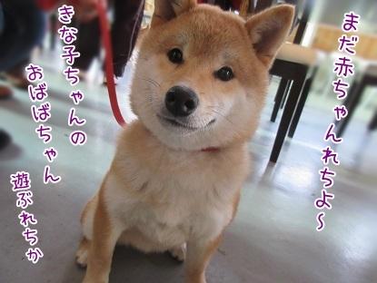 kinako6470.jpg
