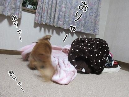 kinako6473.jpg