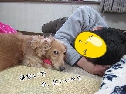 kinako6477.jpg