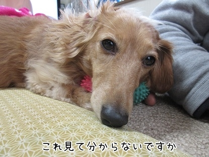 kinako6478.jpg