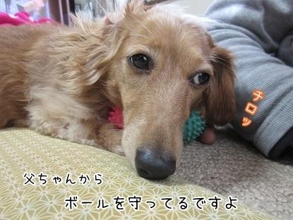 kinako6479.jpg