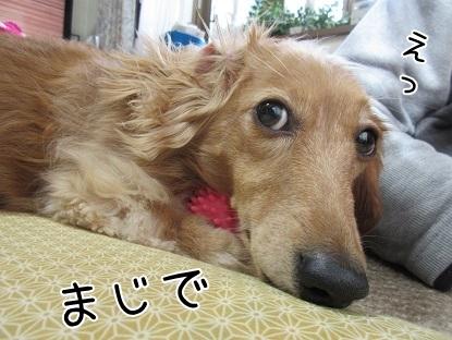 kinako6480.jpg