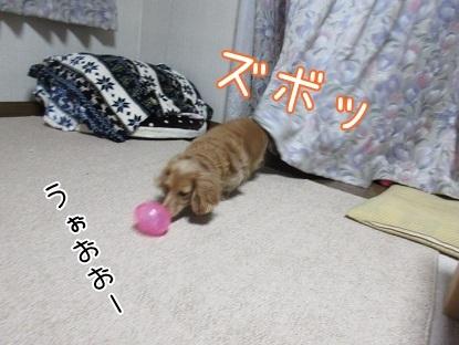 kinako6484.jpg