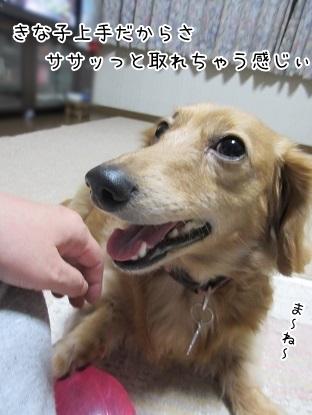 kinako6491.jpg