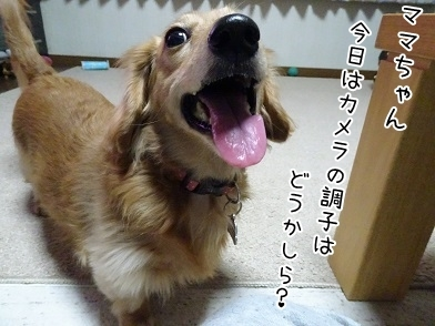 kinako6506.jpg