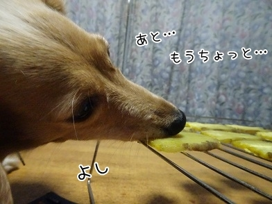 kinako6509.jpg