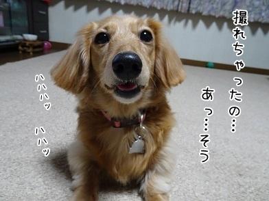kinako6510.jpg