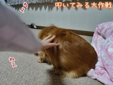 kinako6512.jpg