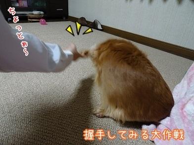 kinako6513.jpg