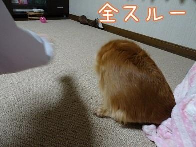 kinako6514.jpg