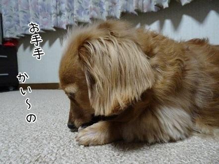 kinako6524.jpg