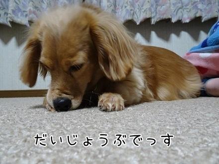 kinako6527.jpg
